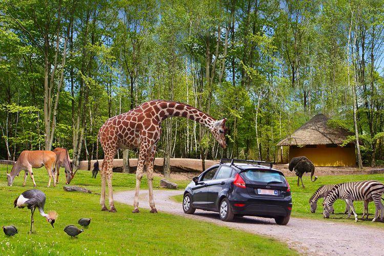 Safaripark Monde Sauvage – reis rond de wereld (2 p.)