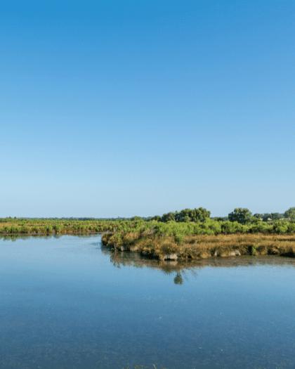 reserve nature bassin