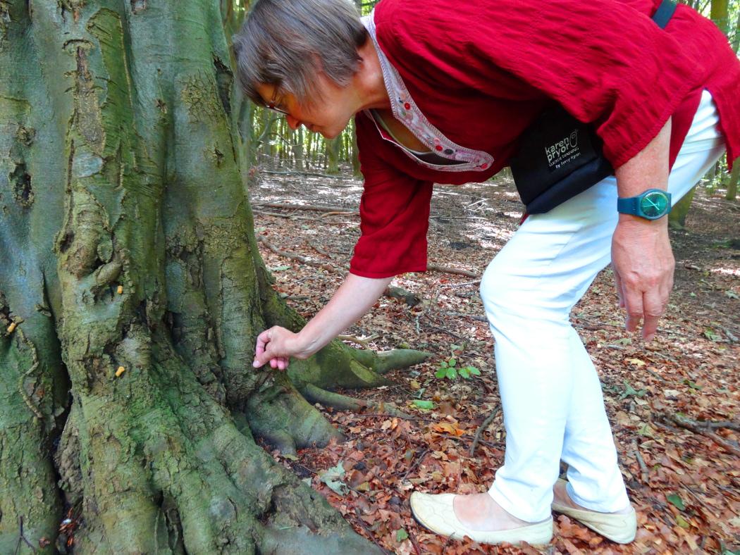 Klargøring af godbidstræ