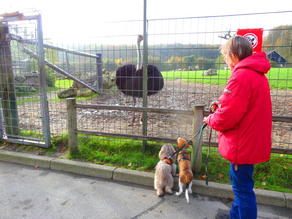 hunde møder struds
