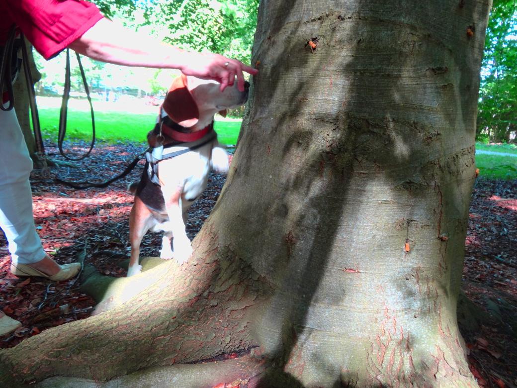 Sofus får hjælp til træ
