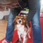 Hundeskolen: Diesels første Tricks