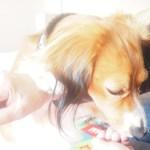 Hundeskolen: Diesels Næste Tricks