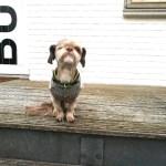 Førstehjælp til hunde og en lang pause