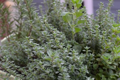 Adventures in Urban Gardening: Learning from my Plants