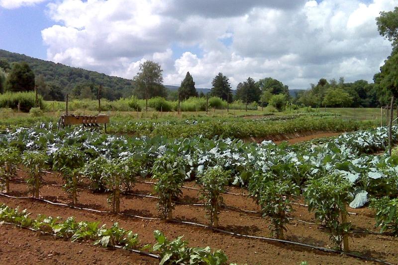 Shawnee Inn Farm