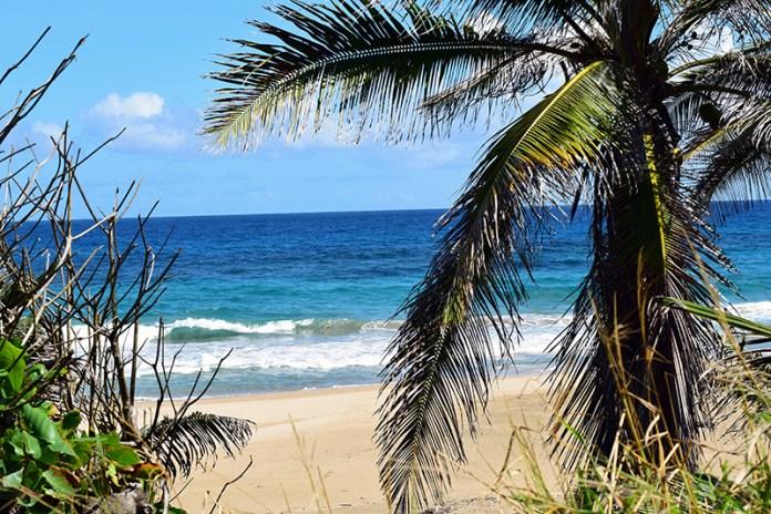 Royal Isabela Beach