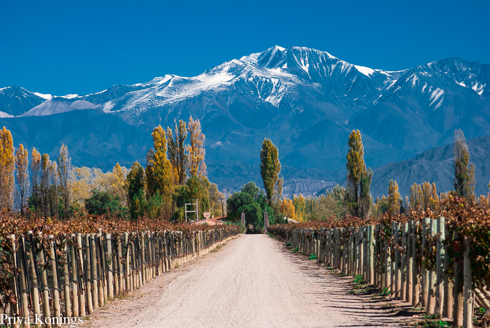 Bed And Wine Mendoza