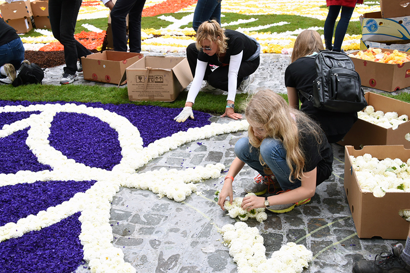 Volunteers Assembling the Brussels Flower Carpet