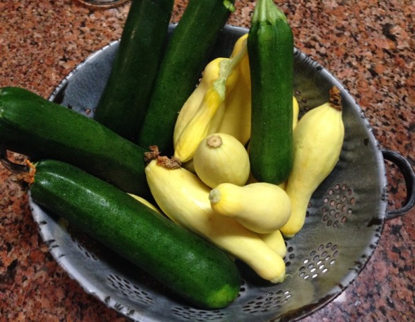 Squash and Zucchini from garden