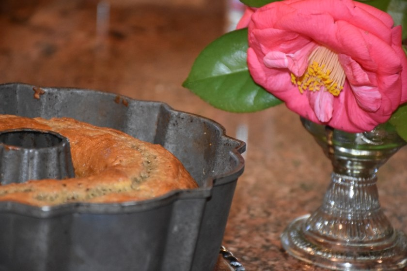 Large Pink camellias and Baked Never Fail Spirited Italian Rossa Bundt Cake www.diningwithmimi.com