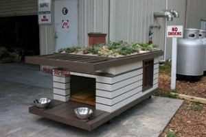 green roof doghouse