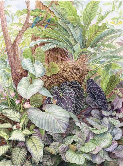 Rainforest Marion Perkins