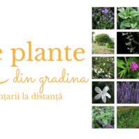 20 plante anti-tantari din gradina