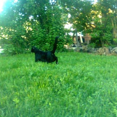 Pasa se bucura de iarba