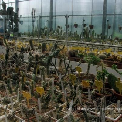Colectia de cactusi de la Balcic