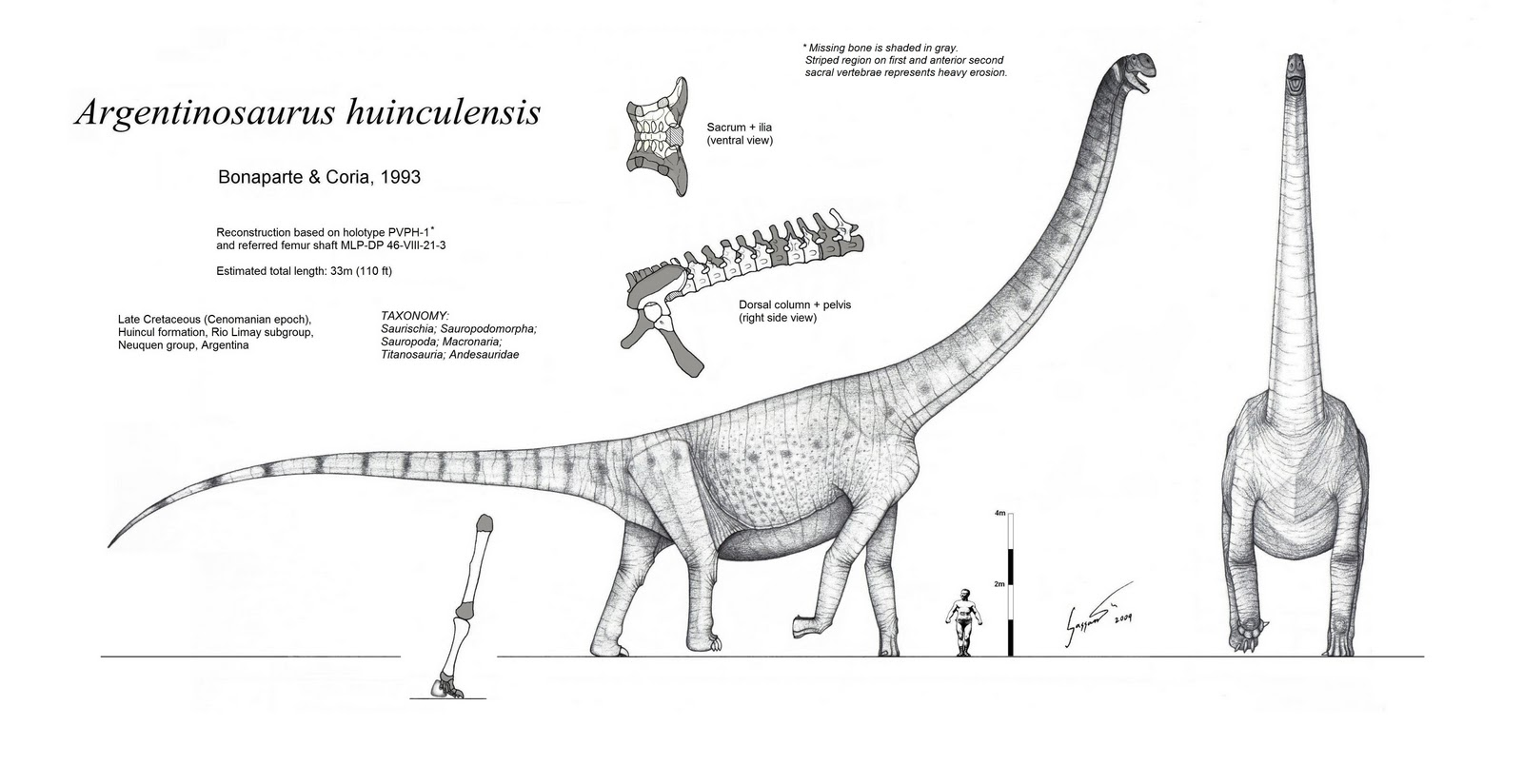 Argentinosaurus Black And White Dinosaurs Pictures And Facts