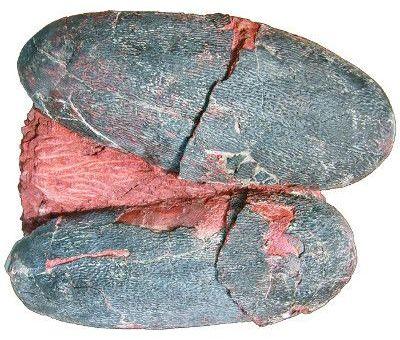 fossilized dinosaur eggs