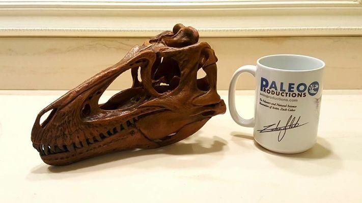 desktop diinosaur skull replicas