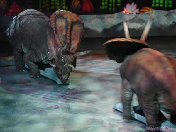Combat territorial entre deux Torosaurus