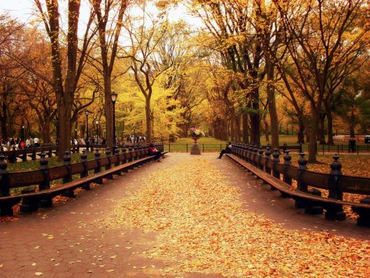 otoc3b1o-central-park10071