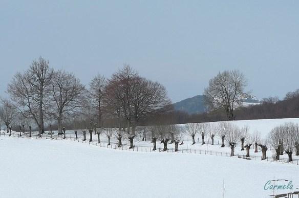 blanco campo nevado