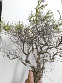 vegetazione presepe
