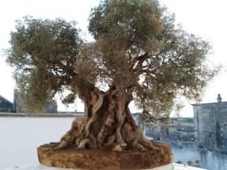 Albero di Ulivo in miniatura artigianale