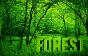 Ghana To Mark International Day Of Forests On June 26