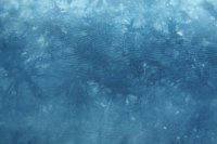 Blue lwi cotton