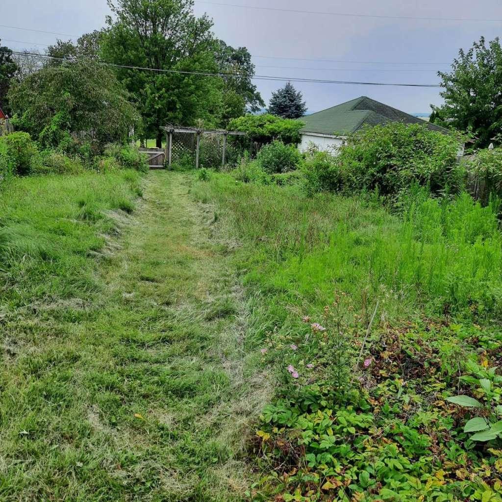 Jungle vs lawn