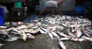Un trabajador de una lonja de pescado descarga las capturas del día. Foto: FAO
