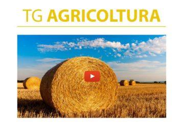 tg agricoltura