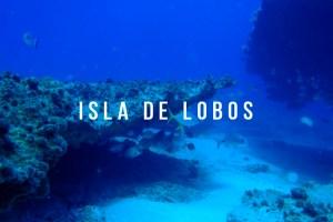 """¡Visita """"Isla de Lobos"""" un paraíso cerca de Tuxpan!"""