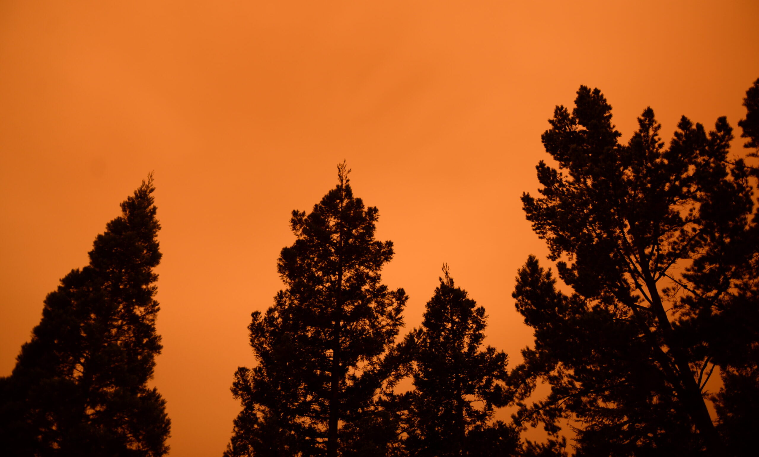 Walnut Creek, Calif. on September 9, 2020, under wildfire smoke and ash. (Paul Sherer/ Direct Relief)
