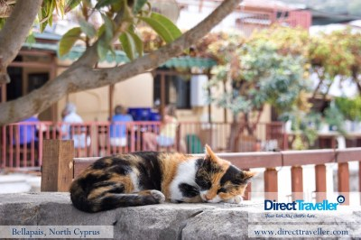 A sleepy cat enjoying the peace of the village