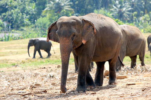 Discovering The Wild Side Of Sri Lanka National Parks 3
