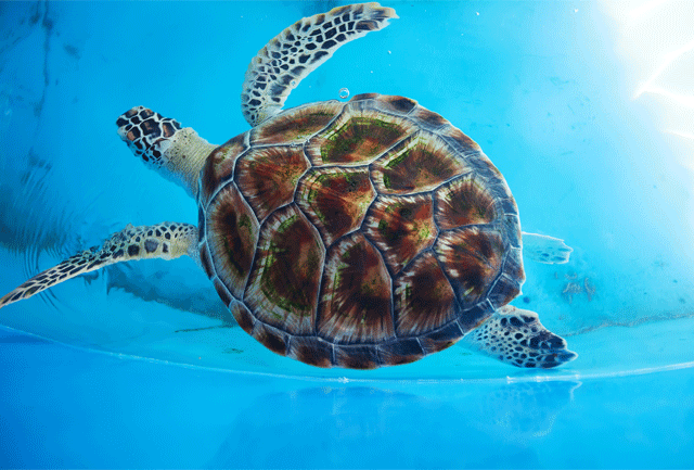 Turtles live in Cyprus