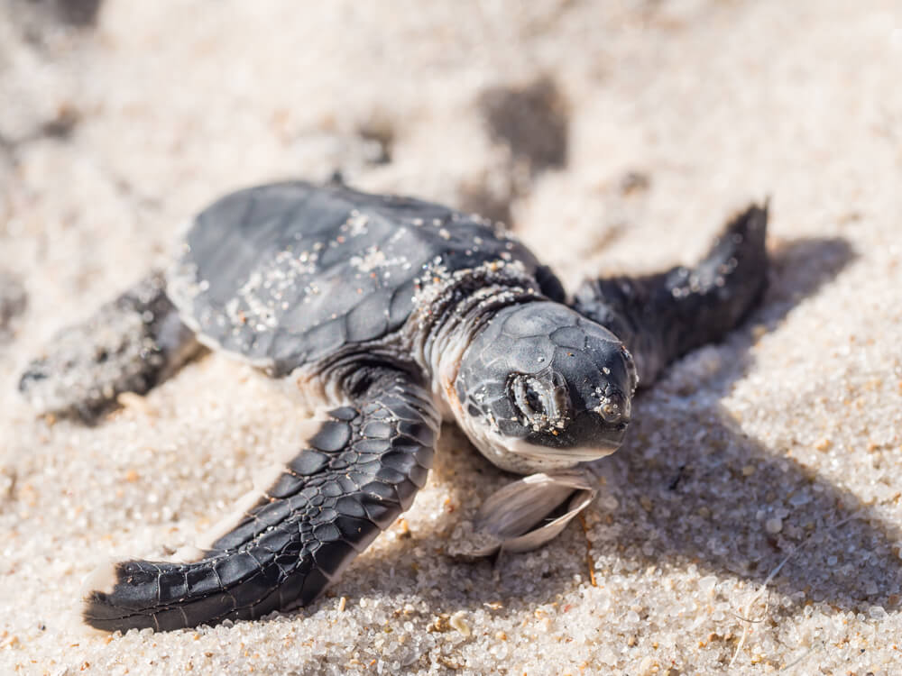 The Magical North Cyprus Turtles Project