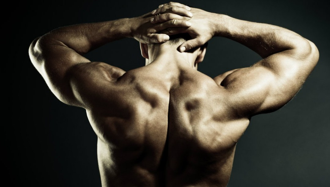 Simple Back Workouts for Men and Women (Upper and Lower)