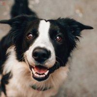 Non solo cane guida per ciechi: esiste anche il cane da assistenza per persone con altre disabilità!