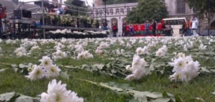 Hundreds of white flowers lying on grass