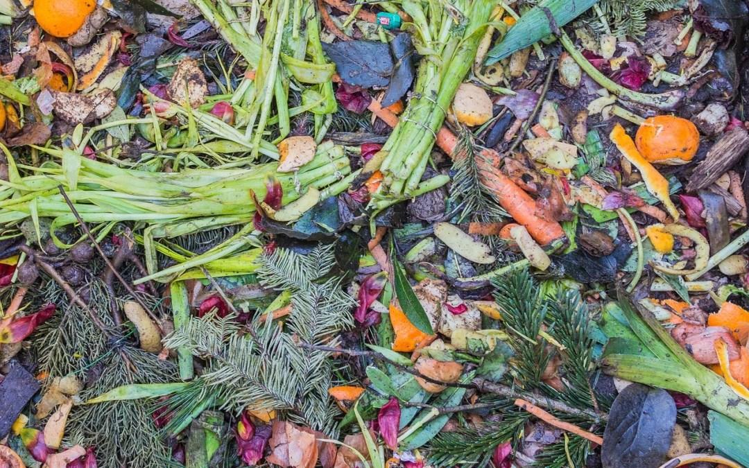 gara - raccolta rifiuti biologici
