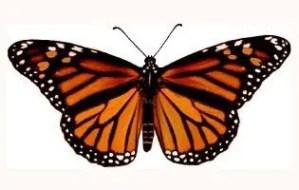 Illuminati-Butterfly.jpg