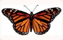 Illuminati-Butterfly_thumb.jpg