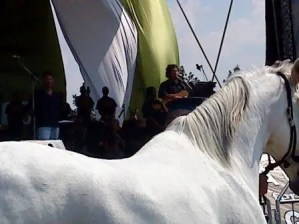 Close up of White Horse and you still can't see Jesus