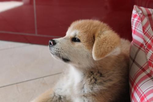 Cuccioli di cane che ci fanno tenerezza