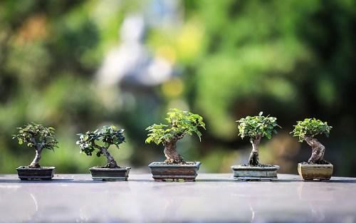 Sapere come fare un bonsai può portare anche a questo: nella foto, cinque bonsai veramente piccolissimi
