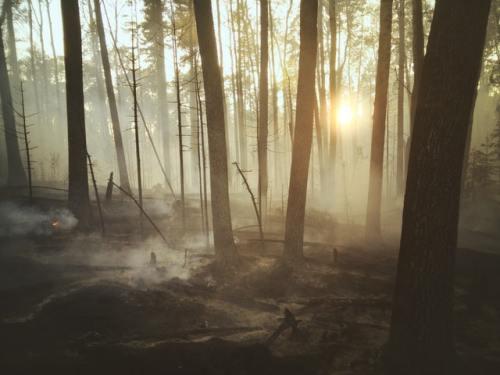 Le foreste, dopo gli incendi, possono reagire in diversi modi: spesso sono in grado di rigenersarsi.