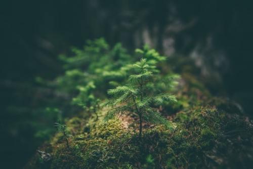 La nuova strategia europea per le foreste prevede di piantare 3 miliardi di alberi entro il 2030. Piantare alberi è sicuramente parte della soluzione al cambiamento climatico.
